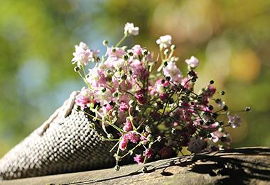bag-gypsofilia-seeds-1716655_960_720-v