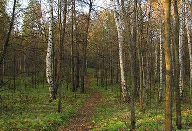 forest-2901838_960_720