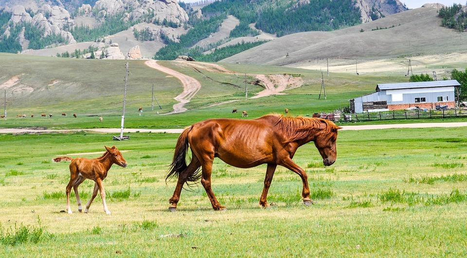 foal-2507458_960_720