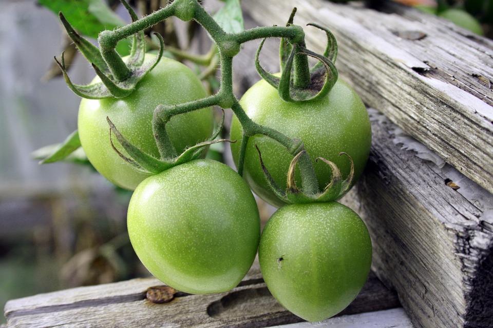 yashel-pomidor