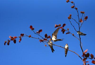 swallow-3956368_1280