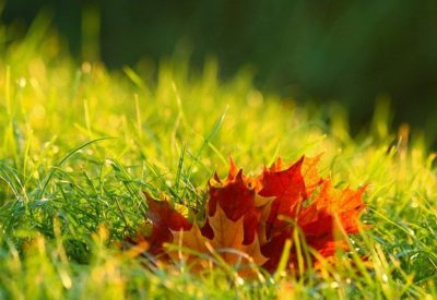 foliage-4574860_640