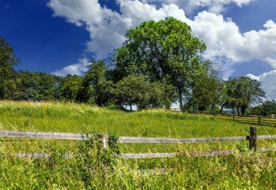 meadow-4781044_640
