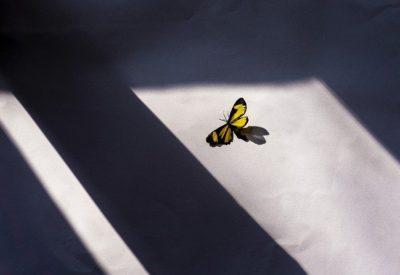 butterfly-5344157_640