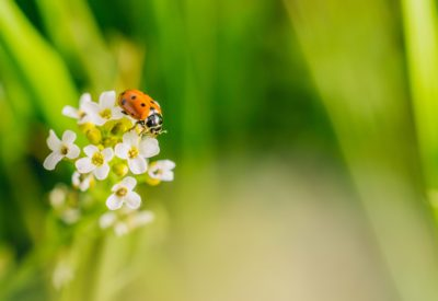 A selective focus shot of a ladybird beetle on a flower in a field captured on a sunny day